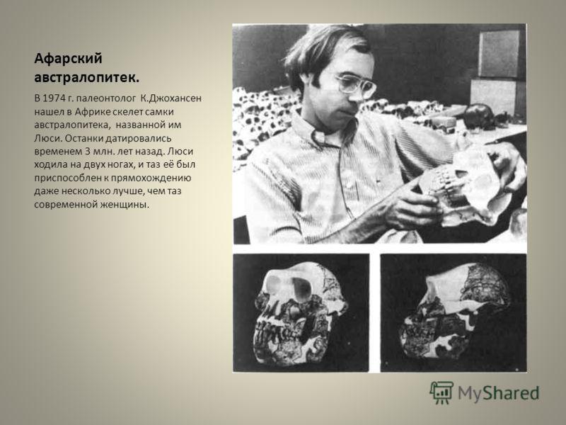 Афарский австралопитек. В 1974 г. палеонтолог К.Джохансен нашел в Африке скелет самки австралопитека, названной им Люси. Останки датировались временем 3 млн. лет назад. Люси ходила на двух ногах, и таз её был приспособлен к прямохождению даже несколь