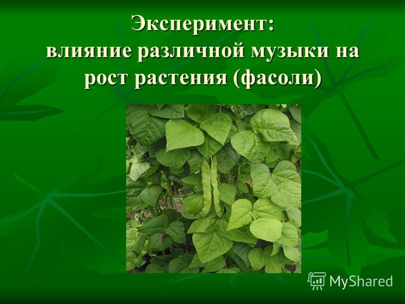 Эксперимент: влияние различной музыки на рост растения (фасоли)