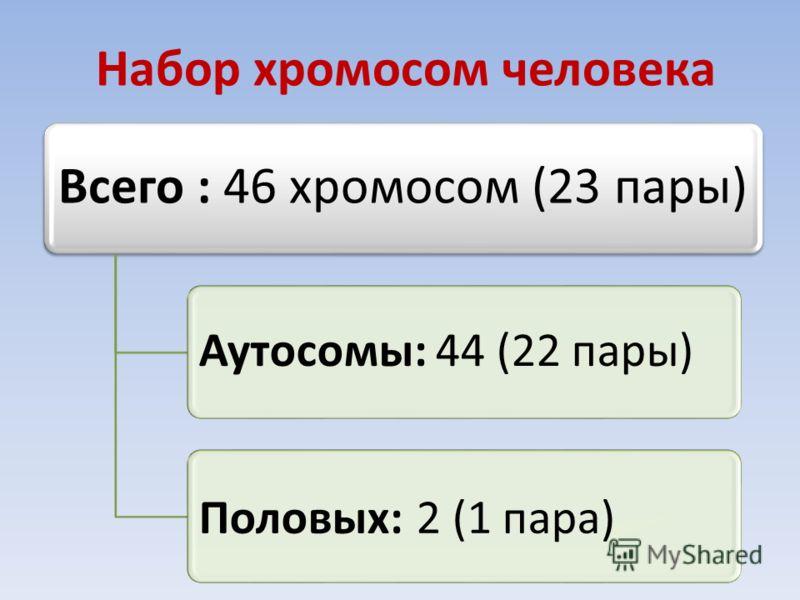 Набор хромосом человека Всего : 46 хромосом (23 пары) Аутосомы: 44 (22 пары) Половых: 2 (1 пара)