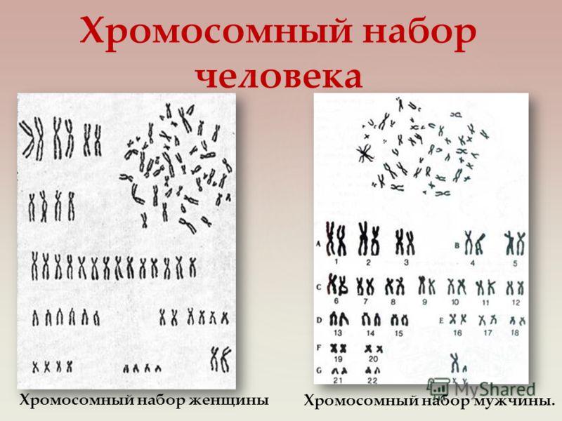 Хромосомный набор человека Хромосомный набор женщины Хромосомный набор мужчины.