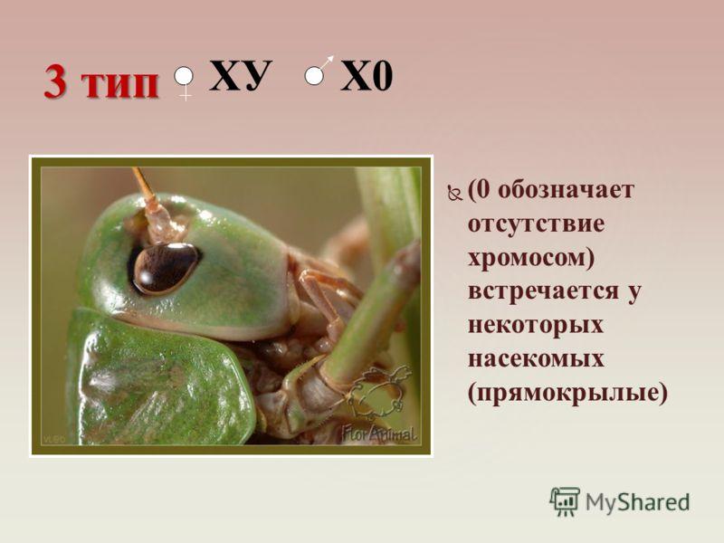 (0 обозначает отсутствие хромосом) встречается у некоторых насекомых (прямокрылые) 3 тип ХУ Х0