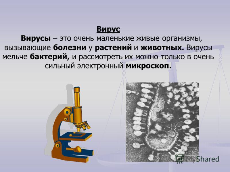 Вирус Вирусы – это очень маленькие живые организмы, вызывающие болезни у растений и животных. Вирусы мельче бактерий, и рассмотреть их можно только в очень сильный электронный микроскоп.