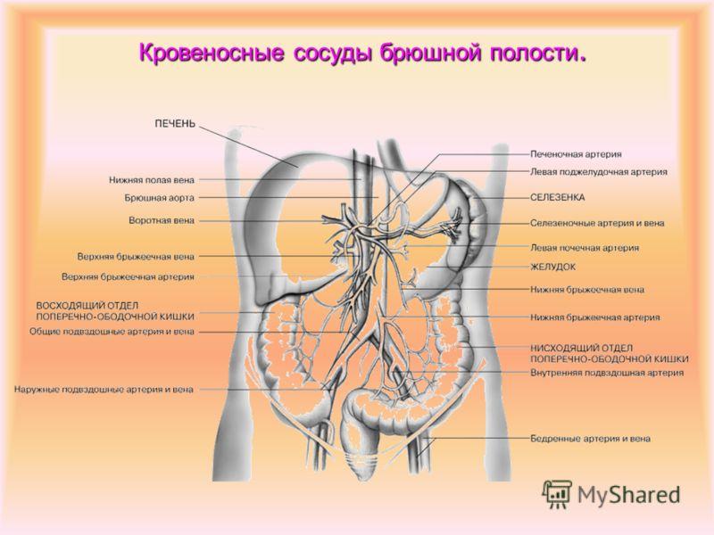 Кровеносные сосуды головы и грудной клетки.