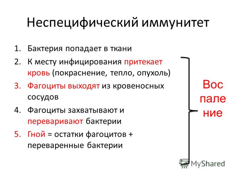 Неспецифический иммунитет 1.Бактерия попадает в ткани 2.К месту инфицирования притекает кровь (покраснение, тепло, опухоль) 3.Фагоциты выходят из кровеносных сосудов 4.Фагоциты захватывают и переваривают бактерии 5.Гной = остатки фагоцитов + переваре