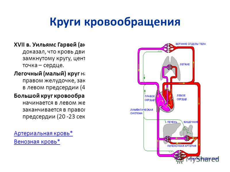 Круги кровообращения XVII в. Уильямс Гарвей (анг. уч.) доказал, что кровь движется по замкнутому кругу, центральная точка – сердце. Легочный (малый) круг начинается в правом желудочке, заканчивается в левом предсердии (4 сек.). Большой круг кровообра