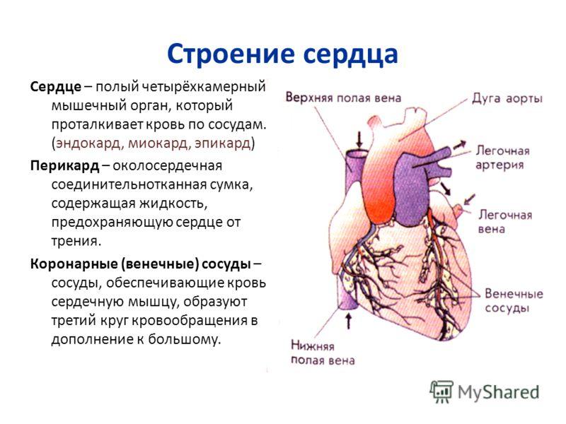 Строение сердца Сердце – полый четырёхкамерный мышечный орган, который проталкивает кровь по сосудам. (эндокард, миокард, эпикард) Перикард – околосердечная соединительнотканная сумка, содержащая жидкость, предохраняющую сердце от трения. Коронарные