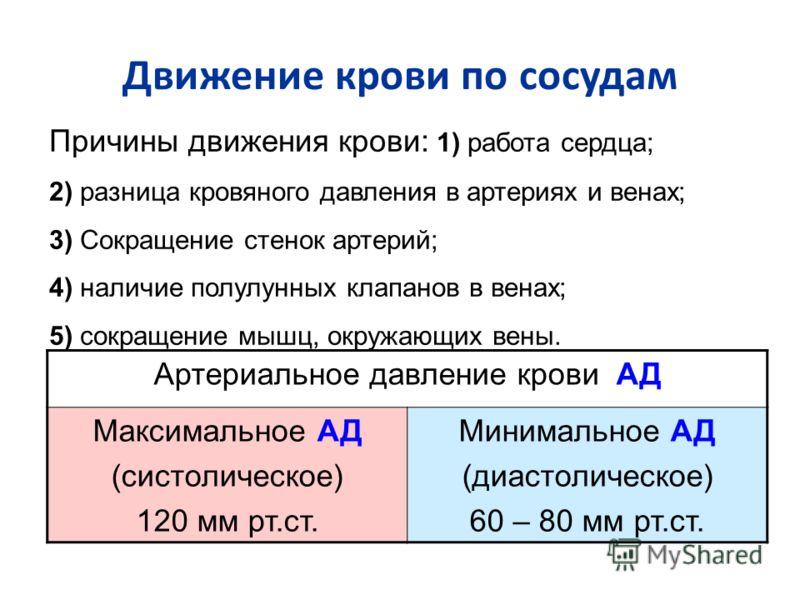 Движение крови по сосудам Артериальное давление крови АД Максимальное АД (систолическое) 120 мм рт.ст. Минимальное АД (диастолическое) 60 – 80 мм рт.ст. Причины движения крови: 1) работа сердца; 2) разница кровяного давления в артериях и венах; 3) Со