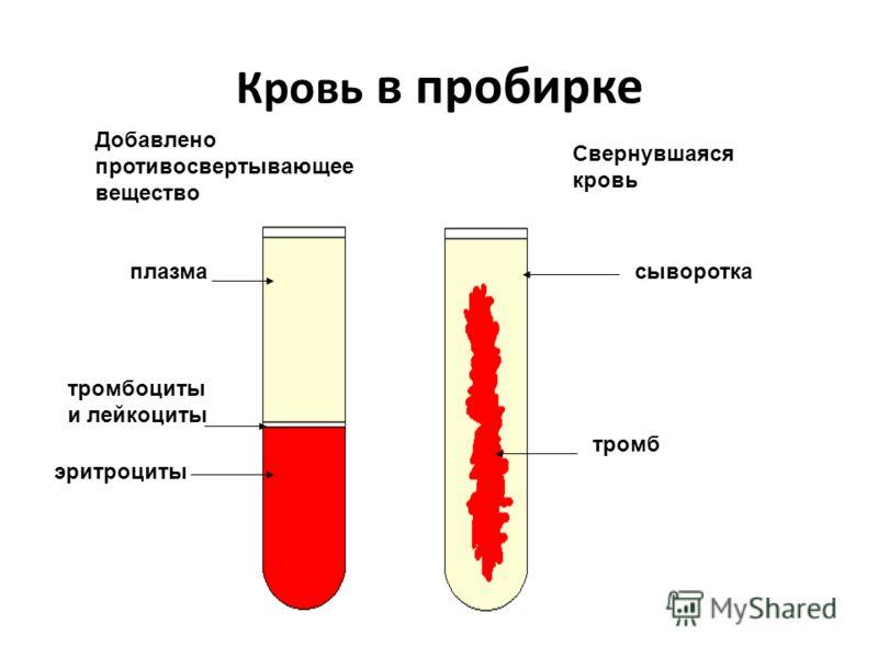 Кровь в пробирке Добавлено противосвертывающее вещество Свернувшаяся кровь плазма тромбоциты и лейкоциты эритроциты сыворотка тромб