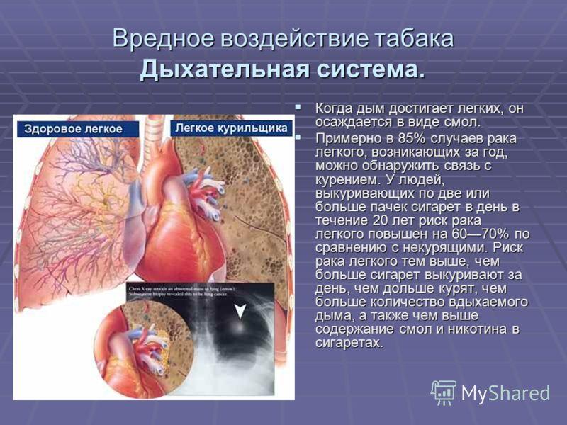 Вредное воздействие табака Дыхательная система. Когда дым достигает легких, он осаждается в виде смол. Когда дым достигает легких, он осаждается в виде смол. Примерно в 85% случаев рака легкого, возникающих за год, можно обнаружить связь с курением.