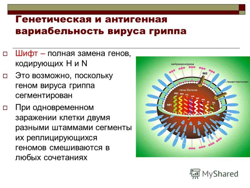 Шифт – полная замена генов, кодирующих H и N Это возможно, поскольку геном вируса гриппа сегментирован При одновременном заражении клетки двумя разными штаммами сегменты их реплицирующихся геномов смешиваются в любых сочетаниях Генетическая и антиген