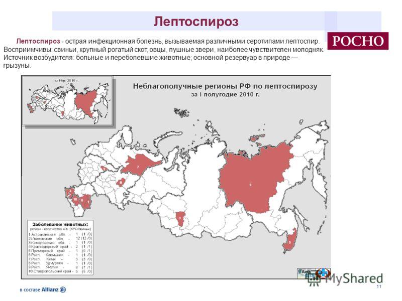 11 Лептоспироз - острая инфекционная болезнь, вызываемая различными серотипами лептоспир. Восприимчивы: свиньи, крупный рогатый скот, овцы, пушные звери, наиболее чувствителен молодняк. Источник возбудителя: больные и переболевшие животные; основной