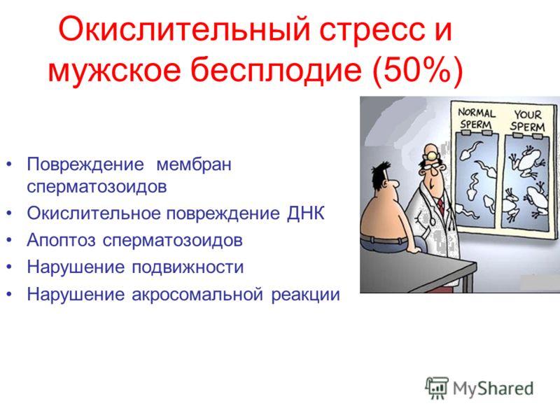 Окислительный стресс и мужское бесплодие (50%) Повреждение мембран сперматозоидов Окислительное повреждение ДНК Апоптоз сперматозоидов Нарушение подвижности Нарушение акросомальной реакции