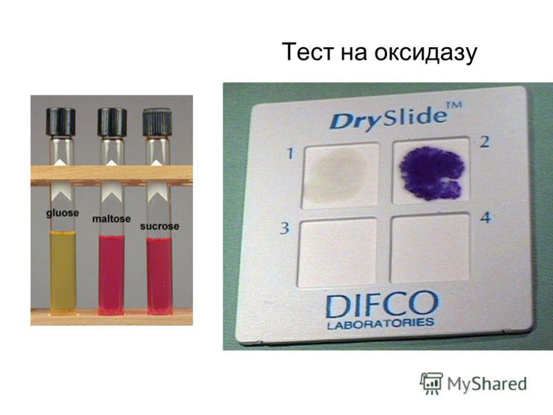 Тест на оксидазу