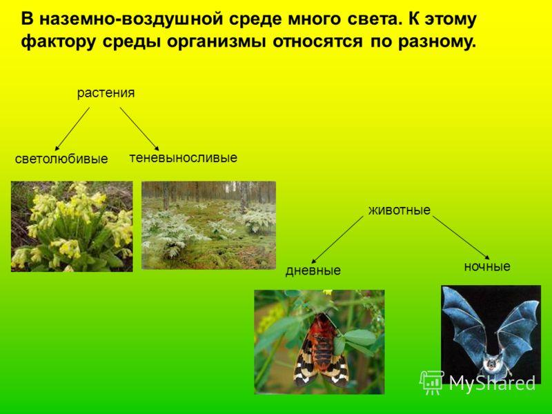 В наземно-воздушной среде много света. К этому фактору среды организмы относятся по разному. растения светолюбивые теневыносливые животные дневные ночные