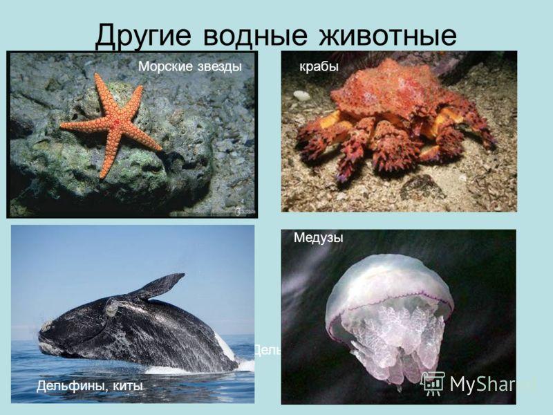 Другие водные животные Морские звезды Дельфины, киты Медузы крабы