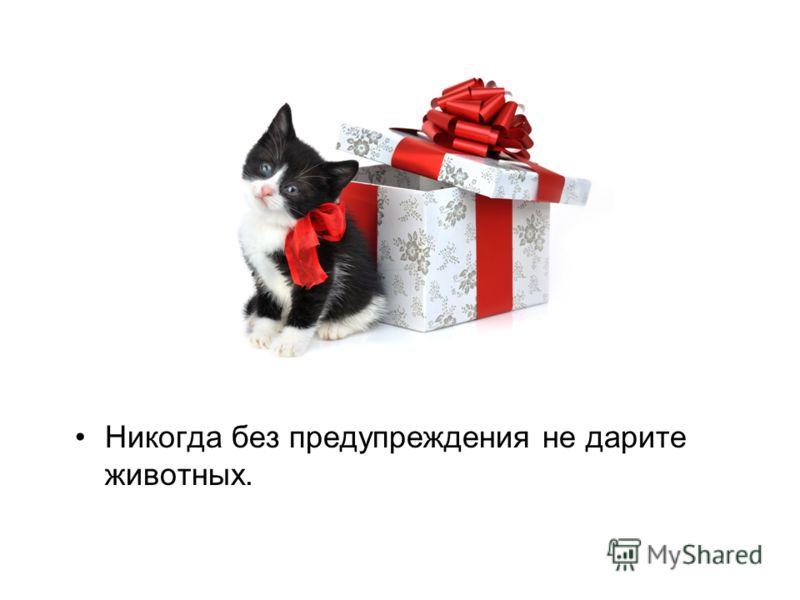 Никогда без предупреждения не дарите животных.