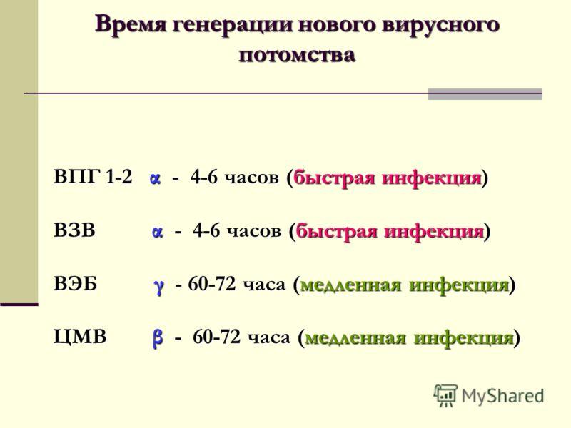 Время генерации нового вирусного потомства ВПГ 1-2 α - 4-6 часов (быстрая инфекция) ВЗВ α - 4-6 часов (быстрая инфекция) ВЭБ γ - 60-72 часа (медленная инфекция) ЦМВ β - 60-72 часа (медленная инфекция)