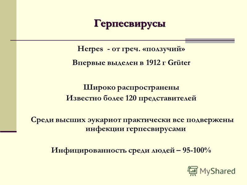 Герпесвирусы Herpes - от греч. «ползучий» Впервые выделен в 1912 г Grüter Широко распространены Известно более 120 представителей Среди высших эукариот практически все подвержены инфекции герпесвирусами Среди высших эукариот практически все подвержен