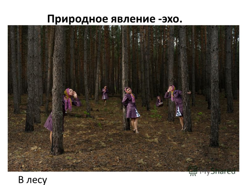 Природное явление -эхо. В лесу