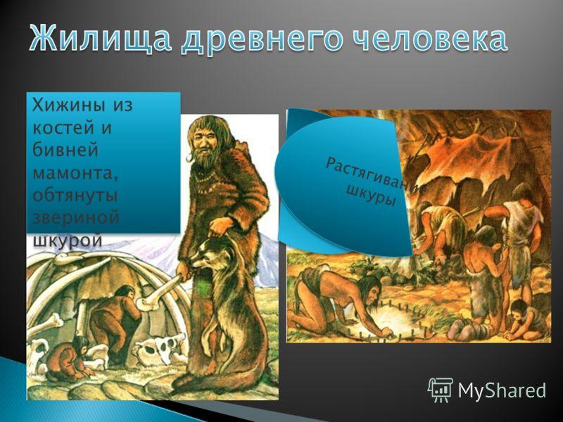 Хижины из костей и бивней мамонта, обтянуты звериной шкурой Растягивание шкуры Растягивание шкуры