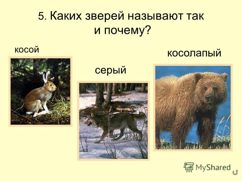 4. Какое животное «лишнее» и почему?