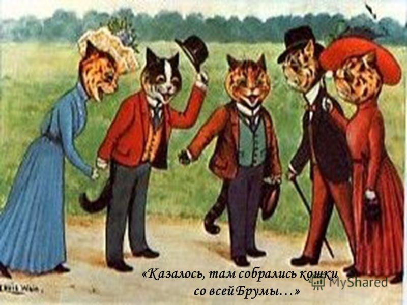 «Казалось, там собрались кошки со всей Брумы…»