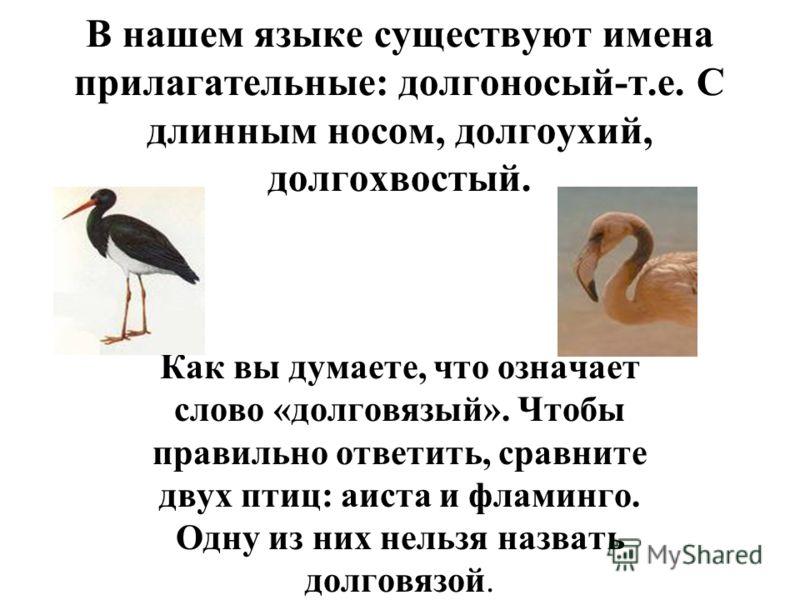В нашем языке существуют имена прилагательные: долгоносый-т.е. С длинным носом, долгоухий, долгохвостый. Как вы думаете, что означает слово «долговязый». Чтобы правильно ответить, сравните двух птиц: аиста и фламинго. Одну из них нельзя назвать долго