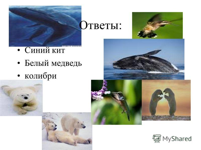 Ответы: Синий кит Белый медведь колибри