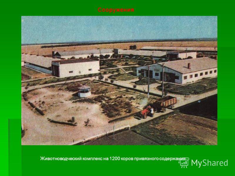 Сооружения Животноводческий комплекс на 1200 коров привязного содержания.
