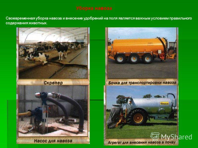 Уборка навоза Своевременная уборка навоза и внесение удобрений на поля является важным условием правильного содержания животных.