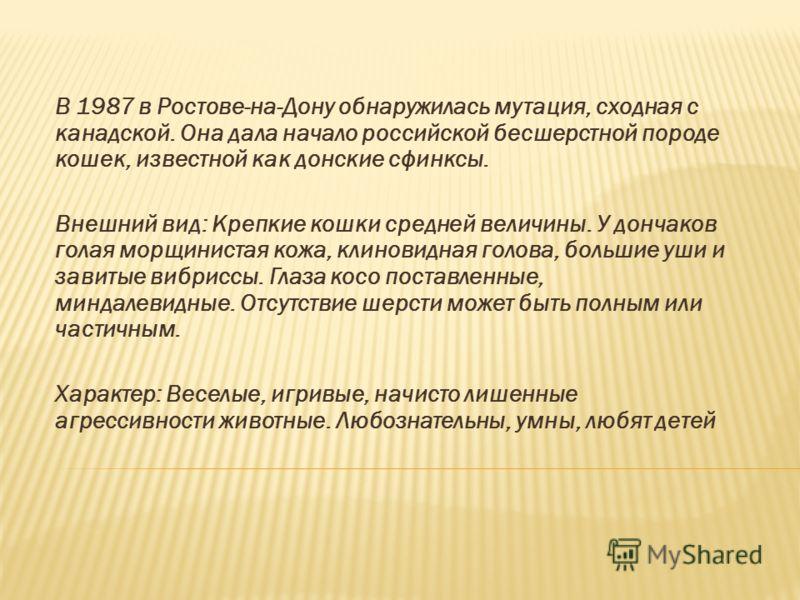 В 1987 в Ростове-на-Дону обнаружилась мутация, сходная с канадской. Она дала начало российской бесшерстной породе кошек, известной как донские сфинксы. Внешний вид: Крепкие кошки средней величины. У дончаков голая морщинистая кожа, клиновидная голова