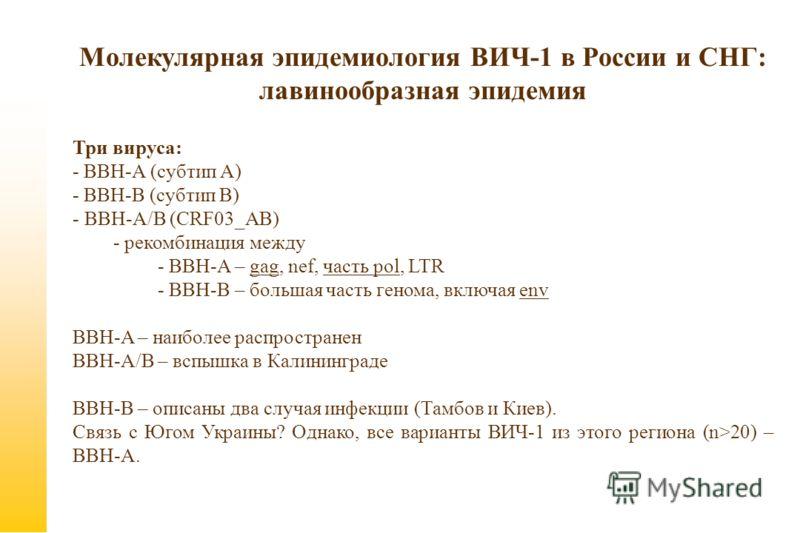 Молекулярная эпидемиология ВИЧ-1 в России и СНГ: лавинообразная эпидемия Три вируса: - ВВН-А (субтип А) - ВВН-B (субтип В) - ВВН-А/В (CRF03_AB) - рекомбинация между - ВВН-A – gag, nef, часть pol, LTR - ВВН-B – большая часть генома, включая env BBH-A