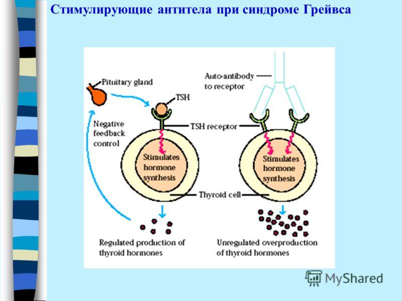 Стимулирующие антитела при синдроме Грейвса
