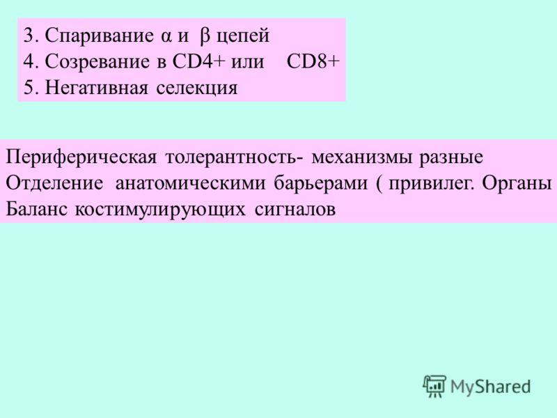 3. Спаривание α и β цепей 4. Созревание в CD4+ или CD8+ 5. Негативная селекция Периферическая толерантность- механизмы разные Отделение анатомическими барьерами ( привилег. Органы Баланс костимулирующих сигналов
