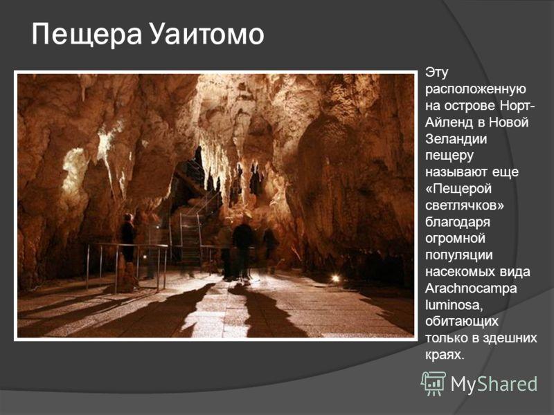 Пещера Уаитомо Эту расположенную на острове Норт- Айленд в Новой Зеландии пещеру называют еще «Пещерой светлячков» благодаря огромной популяции насекомых вида Arachnocampa luminosa, обитающих только в здешних краях.