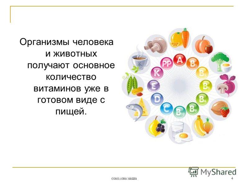 соколова маша 4 Организмы человека и животных получают основное количество витаминов уже в готовом виде с пищей.