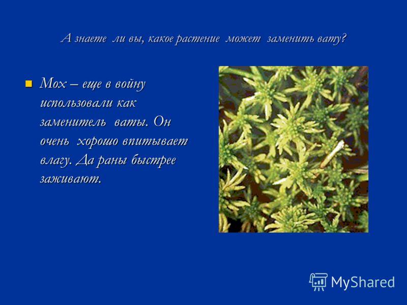 А знаете ли вы, какое растение может заменить вату? Мох – еще в войну использовали как заменитель ваты. Он очень хорошо впитывает влагу. Да раны быстрее заживают. Мох – еще в войну использовали как заменитель ваты. Он очень хорошо впитывает влагу. Да