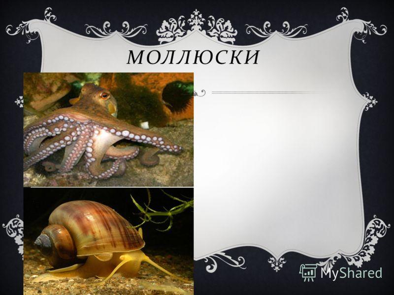 Моллюск и МОЛЛЮСКИ