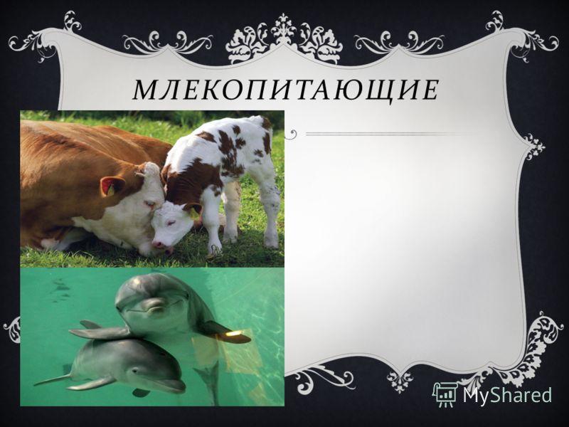 Млекопит ающие МЛЕКОПИТАЮЩИЕ