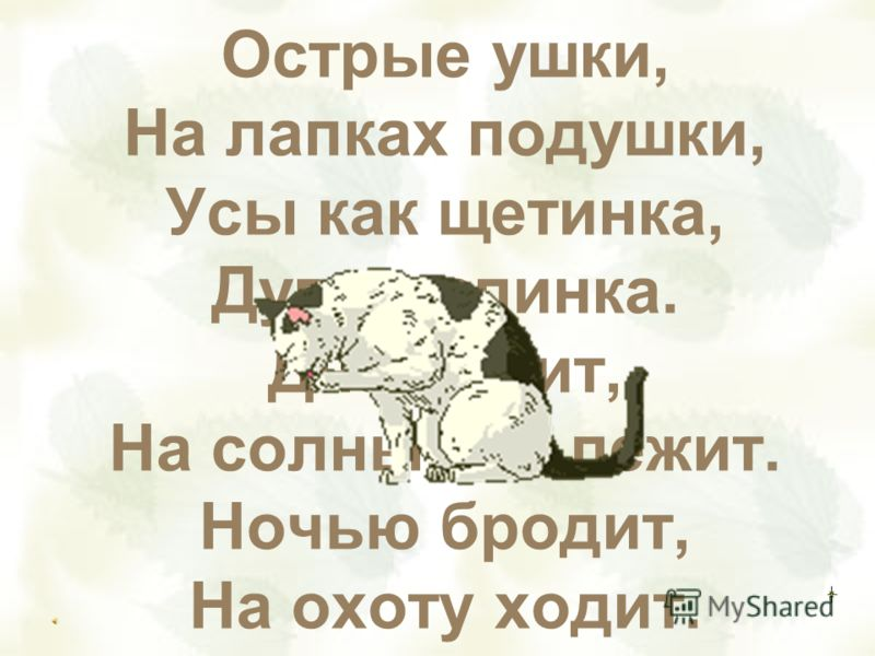 Острые ушки, На лапках подушки, Усы как щетинка, Дугою спинка. Днём спит, На солнышке лежит. Ночью бродит, На охоту ходит.