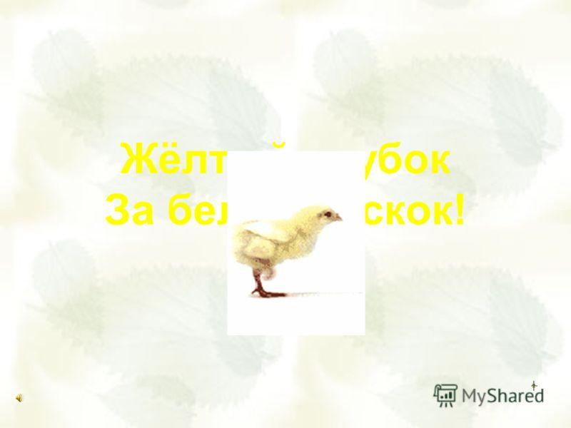 Жёлтый клубок За белым – скок!