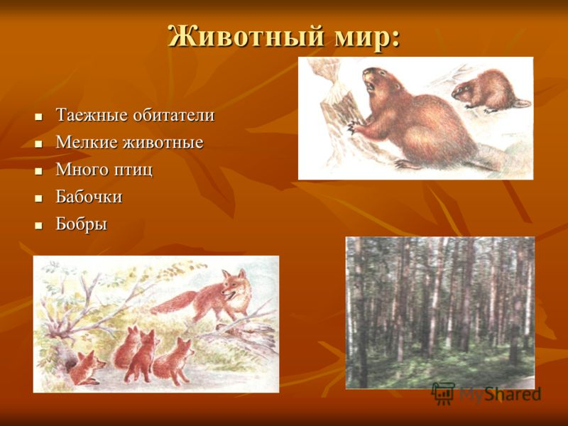 Животный мир: Таежные обитатели Таежные обитатели Мелкие животные Мелкие животные Много птиц Много птиц Бабочки Бабочки Бобры Бобры