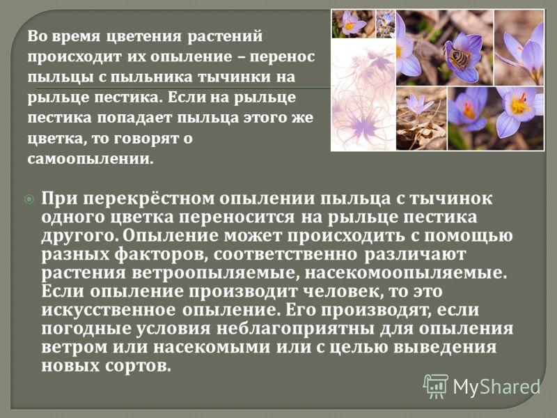 При перекрёстном опылении пыльца с тычинок одного цветка переносится на рыльце пестика другого. Опыление может происходить с помощью разных факторов, соответственно различают растения ветроопыляемые, насекомоопыляемые. Если опыление производит челове