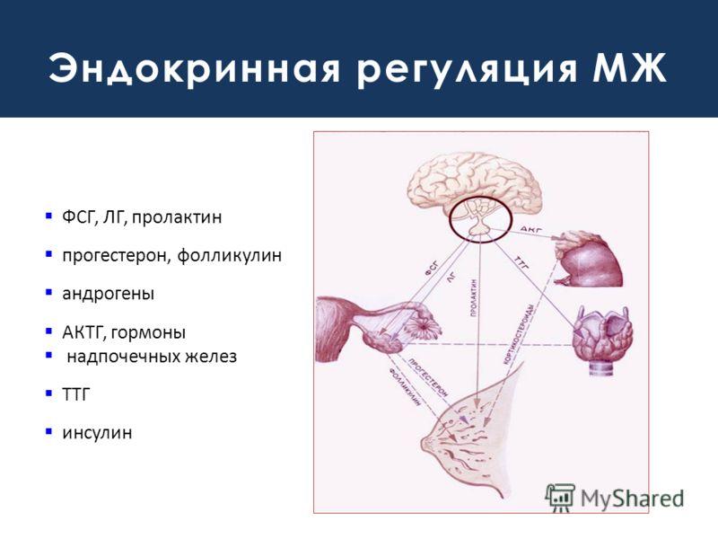 Эндокринная регуляция МЖ ФСГ, ЛГ, пролактин прогестерон, фолликулин андрогены АКТГ, гормоны надпочечных желез ТТГ инсулин
