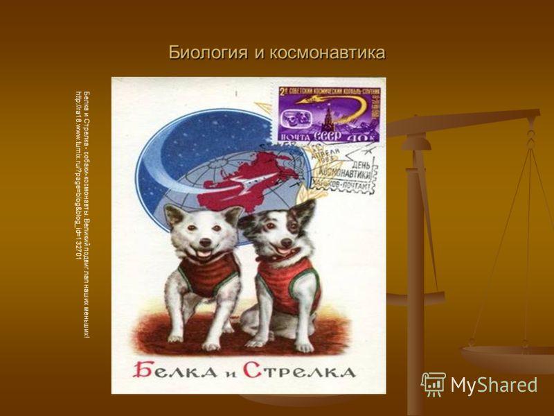 Биология и космонавтика Белка и Стрелка - собаки-космонавты. Великий подвиг лап наших меньших! http://ra18.www.tumix.ru/?page=blog&blog_id=132701