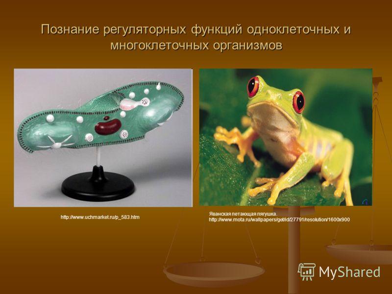 Познание регуляторных функций одноклеточных и многоклеточных организмов http://www.uchmarket.ru/p_583.htm Яванская летающая лягушка. http://www.mota.ru/wallpapers/get/id/27791/resolution/1600x900
