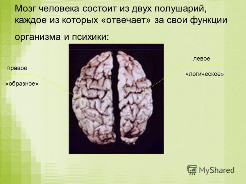 Мозг человека состоит из двух полушарий, каждое из которых «отвечает» за свои функции организма и психики: правое левое «образное» «логическое»