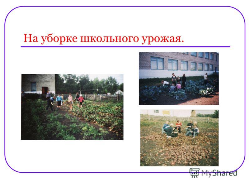 На уборке школьного урожая.