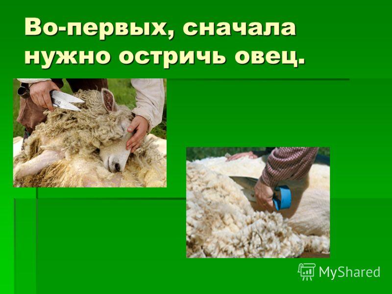 Во-первых, сначала нужно остричь овец.