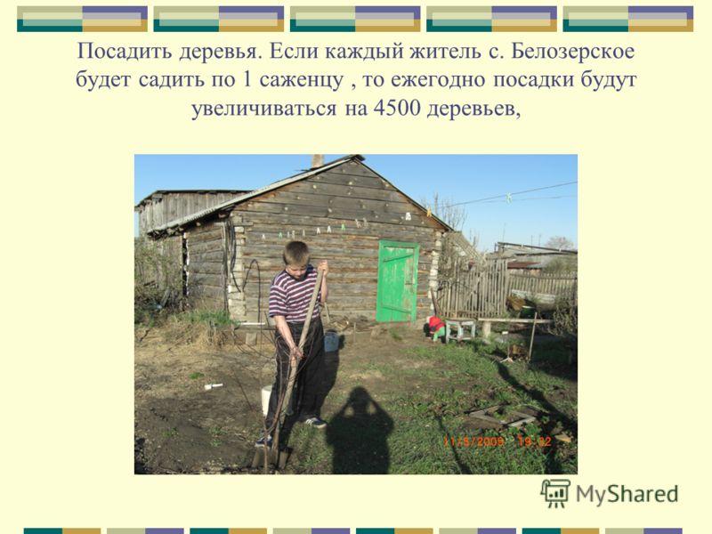 Посадить деревья. Если каждый житель с. Белозерское будет садить по 1 саженцу, то ежегодно посадки будут увеличиваться на 4500 деревьев,